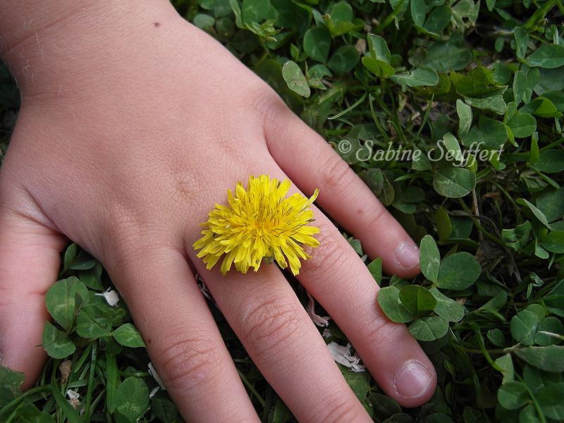 Blumenwiese löwenzahnt