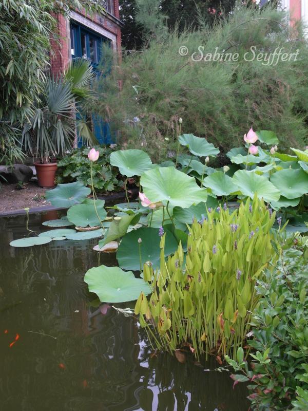 Botanischer Garten 10