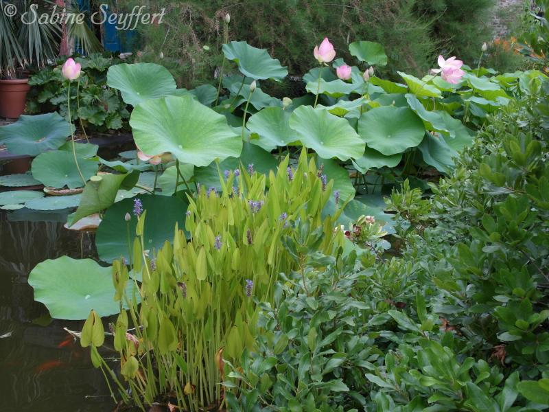 Botanischer Garten 11