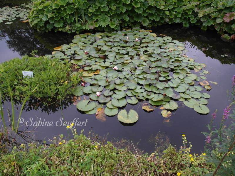 Botanischer Garten 12