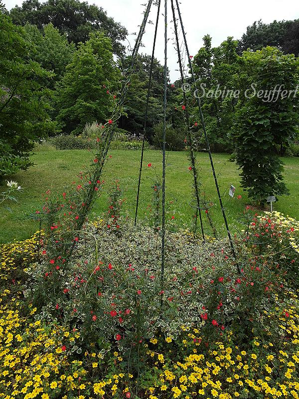 Botanischer Garten 5