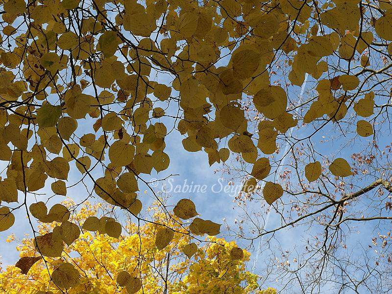 Herbsthimmel 2