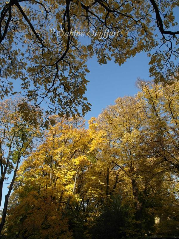 Herbsthimmel 4