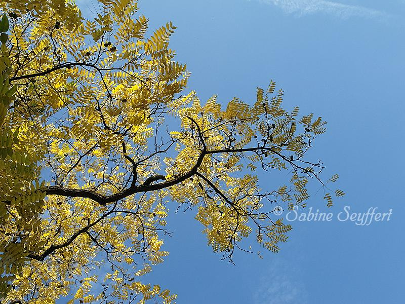 Herbsthimmel 6