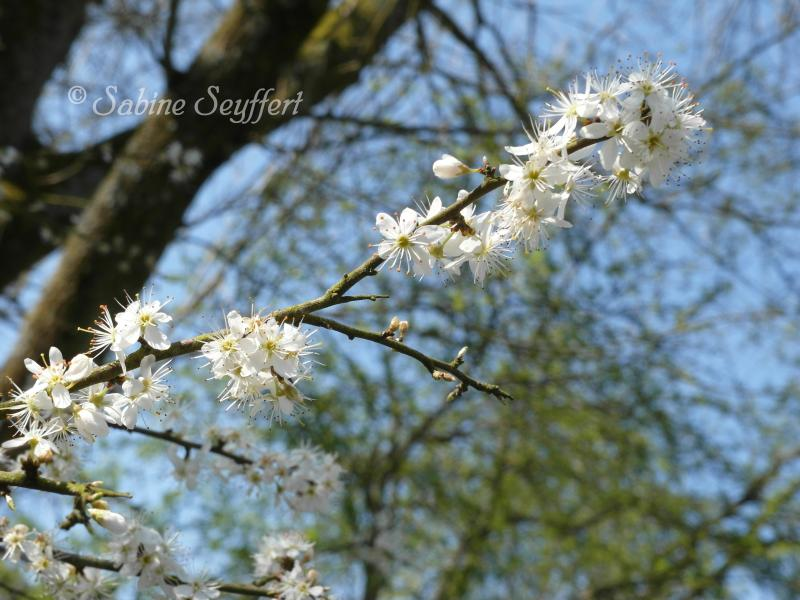 Frühl 1