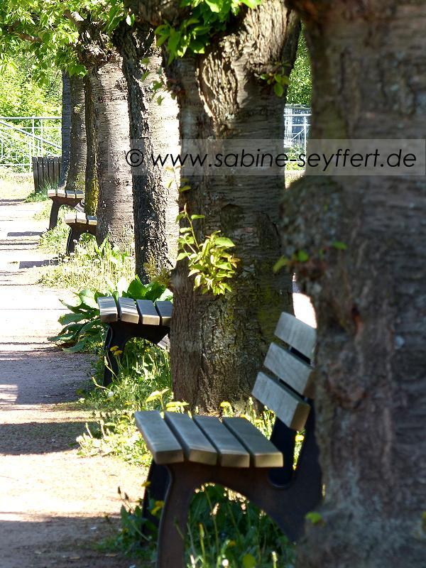 Südpark Bänke am See