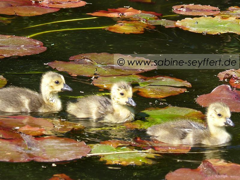Südpark Entenbaby Trio