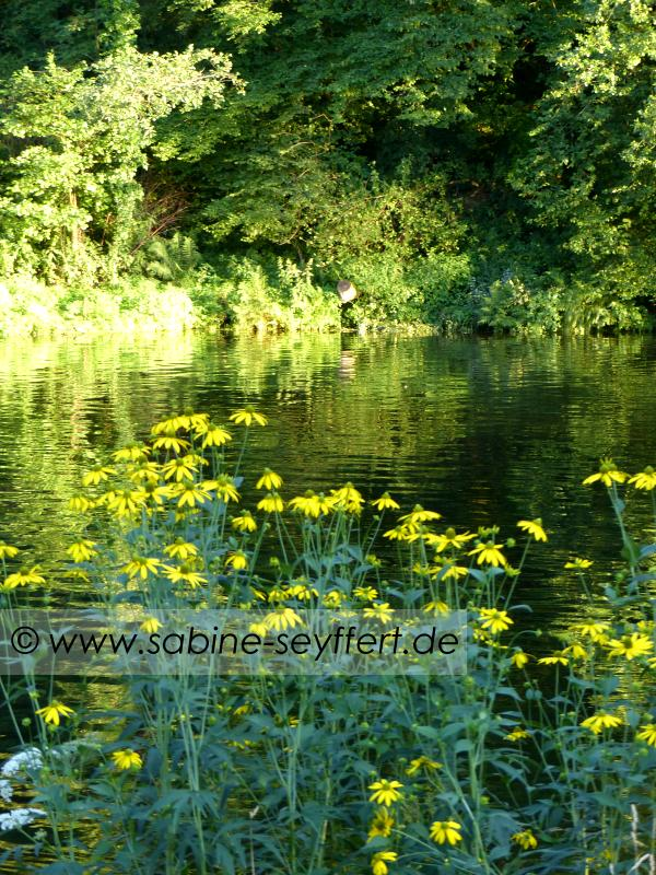 Badesee gelbe Blumen