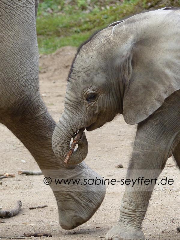 Wuppertaler Zoo Tuffi