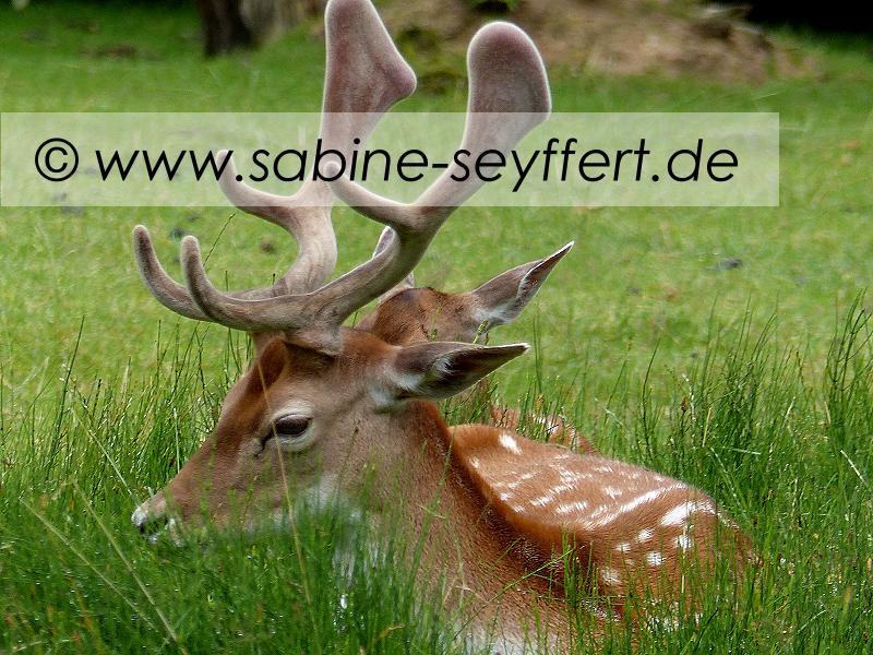Auflug Schloss Thurn Dammwild