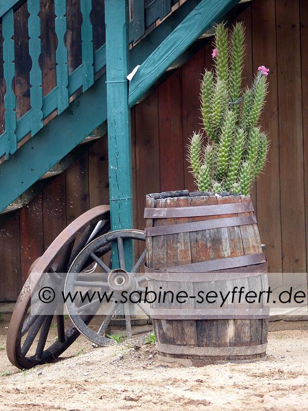 Auflug Schloss Thurn Western Kaktus