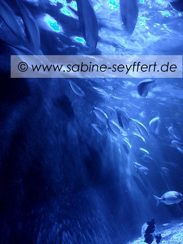 Ausflug Sea Life 1