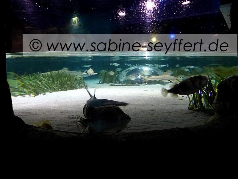 Ausflug Sea Life Becken mit Ausguck Innen