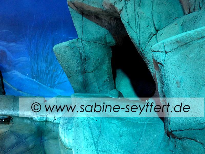 Ausflug Sea Life Grotte