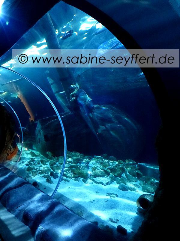 Ausflug Sea Life Tunnel versunkenes Schiff