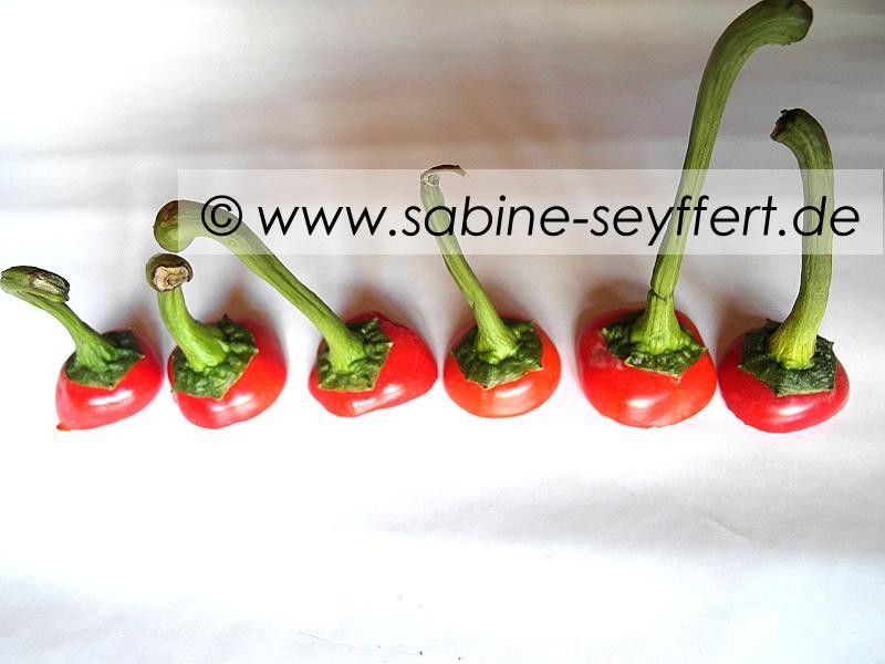 gefuellte-spitzpaprika-2