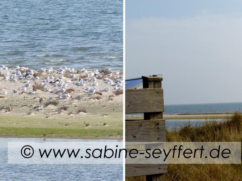 ausflug-ostende-sandbank-und-ausguck